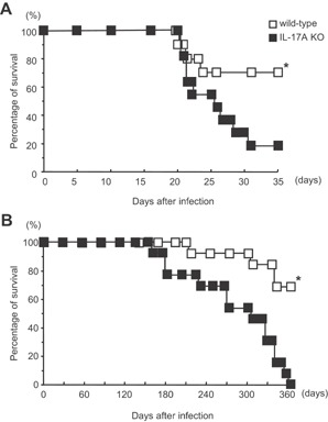 The survival of IL‐17A KO mice after mycobacterial infection. Groups of 11–13 mice were infected i.t. with 1 × 10 5 (A) or 1 × 10 3 (B) CFU of M. tuberculosis H37Rv, and the survival rates were monitored. The statistical significance of the differences in survival was determined by the generalized Wilcoxon's test. P = 0.0018 (A) and P = 0.0052 (B), respectively. The asterisk (*) indicates that the difference was considered to be significant.