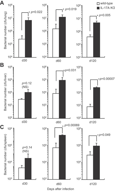 The bacterial growth in various organs of IL‐17A KO mice after mycobacterial infection. Wild‐type C57BL/6 or IL‐17A KO mice were inoculated i.t. with 1 × 10 3 CFU of M. tuberculosis H37Rv, and the CFU in the lungs (A), livers (B), and spleens (C) was determined on days 30, 60, and 120 after the infection. The statistical analysis was performed with Student's t ‐test. The asterisk (*) indicates that there was a significant difference compared with wild‐type C57BL/6 mice.