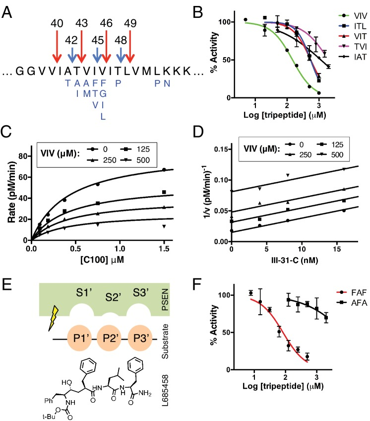 Tripeptide fragments of APP inhibit γ-secretase. ( A ) Schematic diagram of the major sequential cleavage pathways of the transmembrane domain of APP (Aβ49 → Aβ46 → Aβ43 → Aβ40 in red and Aβ48 → Aβ45 → Aβ42 in blue). Mutations causing Familial Alzheimer's disease are below the APP TMD in blue. ( B ) IC50 curves from the inhibition of γ-secretase activity by APP product tripeptide fragments. Mean ± SD, n = 2. ( C ) Noncompetitive inhibition of γ-secretase with VIV tripeptide, R 2 = 0.98. ( D ) Yonetani-Theorell plot for the mutually exclusive binding of VIV and the noncompetitive transition-state analog inhibitor III-31-C, R 2 = 0.98. ( E ) Cartoon representation of the three S' pockets of presenilin (PSEN) along with three P' amino acids of substrate and the transition-state analog L685,458. ( F ) IC50 curves from the inhibition of γ-secretase activity with FAF and AFA synthetic tripeptides. Mean ± SD, n = 2. DOI: http://dx.doi.org/10.7554/eLife.17578.003