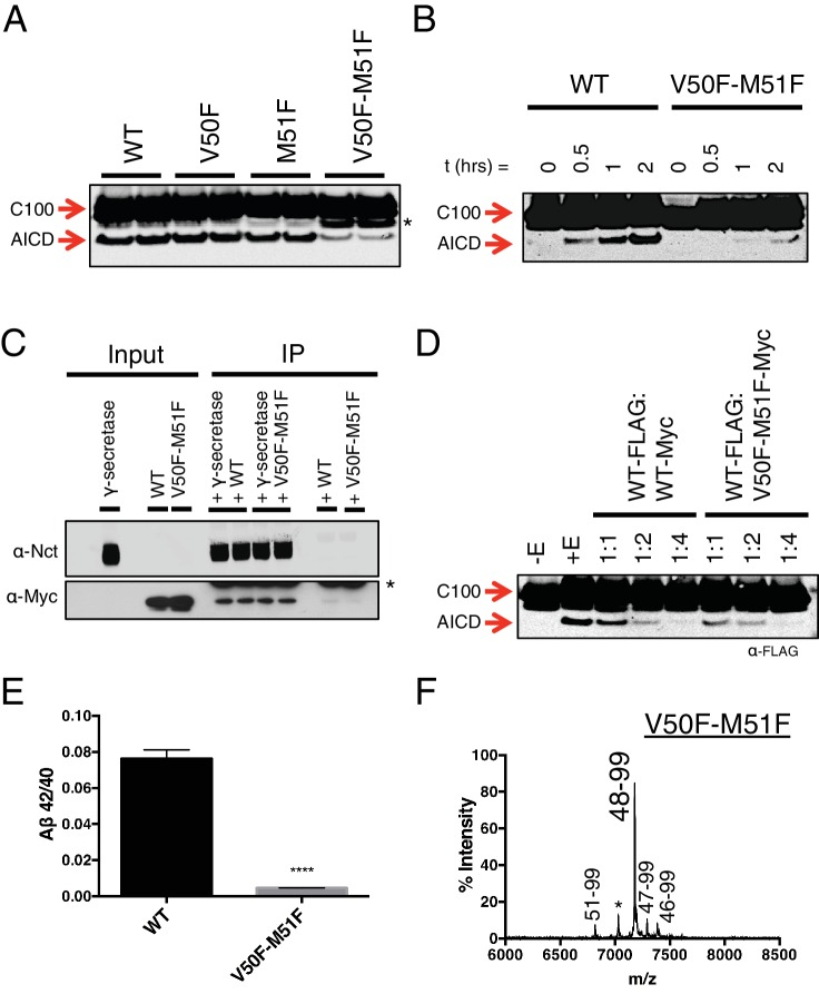 Phenylalanine blocking mutations at both ε cleavage sites reduces APP cleavage but not binding to <t>γ-secretase.</t> ( A ) Western blot of γ-secretase cleavage of WT, V50F, M51F and V50F-M51F C100-FLAG. Duplicates from each substrate represent separate independent data points. * denotes a degradation product which co-purified with the substrate. ( B ) Cleavage of WT and V50F-M51F C100-FLAG over time. ( C ) Co-immunoprecipitation of Myc-tagged WT or V50F-M51F C100 substrate. Duplicates are from separate pull-down experiments. * antibody light chain. ( D ) Competitive cleavage of WT C100-FLAG by WT C100-Myc or V50F-M51F C100-Myc. ( E ) Aβ42/40 ratio of the V50F-M51F double mutant. Mean ± SD, n = 3, t-test, ****