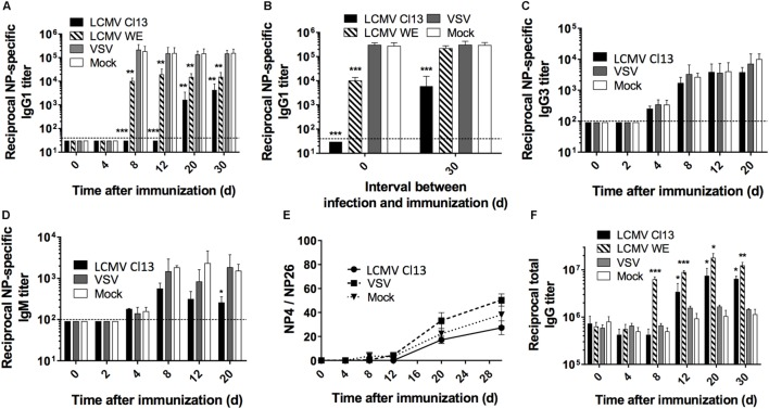 LCMV infection impairs the NP-specific Ab response in a T cell-dependent manner . B6 mice (four per group) were infected with LCMV Cl13 (black), LCMV WE (hatched), VSV (gray), or mock infected (white). Mice were immunized the same day (except when indicated otherwise) with an i.p. injection of NP 53 -CGG in alum (A,B,E,F) or NP 40 -FICOLL in PBS (C,D) . (A) NP-specific IgG1 response monitored by ELISA following NP 53 -CGG immunization. (B) Mice were infected as above and immunized with NP 53 -CGG the same day (d0) or 30 days after infection (d30), and IgG1 NP-specific responses were monitored by ELISA on d8 postimmunization. NP-specific IgG3 (C) or IgM (D) responses monitored by ELISA following NP 40 -FICOLL immunization. (E) ELISA plates were coated with NP 4 -BSA or NP 26 -BSA and high affinity Ab responses were measured as a ratio of Abs binding to NP 4 -BSA versus the total anti-NP IgG1 response binding to NP 26 -BSA. (F) Total serum IgG responses following concomitant infection and NP 53 -CGG immunization. Statistical analysis was performed by individual T -tests between experimental groups and the mock-infected group. * p