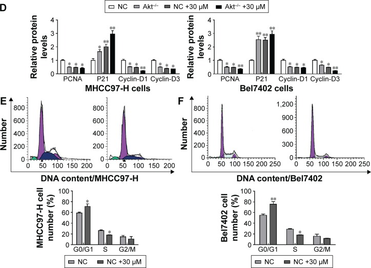 The effect of carnosic acid on apoptosis in Akt-deficient liver cancer cells. Notes: ( A ) The number of cells was detected through terminal deoxynucleotidyl transferase-mediated dUTP nick end labeling (TUNEL) analysis in MHCC97-H cells and in Bel7402 cells. ( B ) Annexin V/PI analysis for the evaluation of apoptosis via flow cytometry in MHCC97-H cells and in Bel7402 cells. ( C ) Cell proliferation was determined by Western blot in different liver cancer cell lines. ( D ) The histogram analysis based on Western blot in MHCC97-H cells and Bel7402 cells. ( E ) Effects of carnosic acid on cell cycle progression in MHCC97-H cells. ( F ) Effects of carnosic acid on cell cycle progression in Bel7402 cells. Data are expressed as the mean ± standard error of the mean. * P