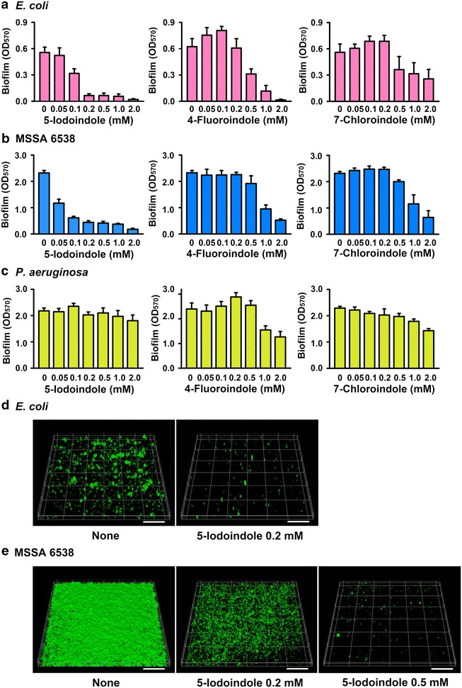 Substituted indoles reduce the biofilm formation of E. coli and S. aureus. Escherichia coli K-12 BW25113 ( a ), S. aureus (MSSA) 6538 ( b ), and P. aeruginosa ( c ) biofilm formation was quantified after culturing with indoles for 24 h in 96-well plates. Error bars indicate SDs. For confocal laser microscope analysis, biofilm formation by E. coli K-12 BW25113 ( d ) and S. aureus (MSSA) 6538 ( e ) was observed in 96-well plates in the presence and absence of 5-iodoindole. The scale bars represent 100 μm. The experiment was performed in triplicate