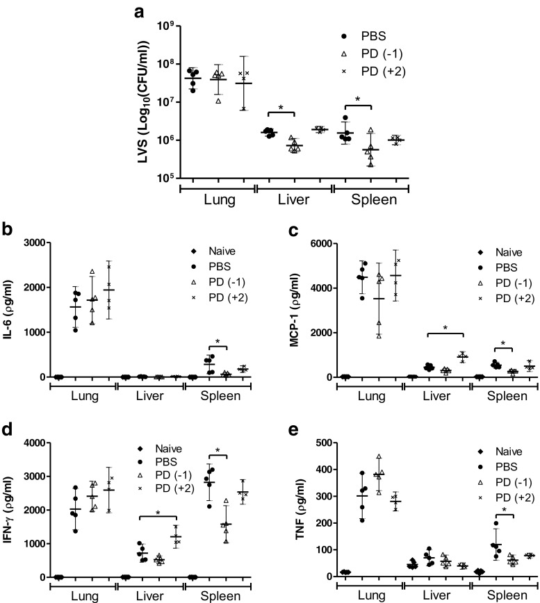 The effect of PD0325901 treatment (0.05 μM) on bacterial burdens and cytokine secretion in the organs of F. tularensis LVS-infected Balb/c mice. Groups of four mice infected via the intranasal route with 2.5 × 10 4 CFU F. tularensis LVS were treated daily with PBS from 24 h pre-challenge (PBS), PD0325901 from 24 h pre-challenge [PD(−1)]or from 48 h post-challenge [PD(+2)]. Naive mice were used as a control. On day 4 post-challenge the organs were removed, homogenised and bacterial burdens were determined ( a ). The homogenates were also screened for the levels of IL-6 ( b ), MCP-1 ( c ), IFN-γ ( d ), and TNF-α ( e ). Significant difference from PBS-treated group was determined using a one-tailed, unpaired t -test (* = p