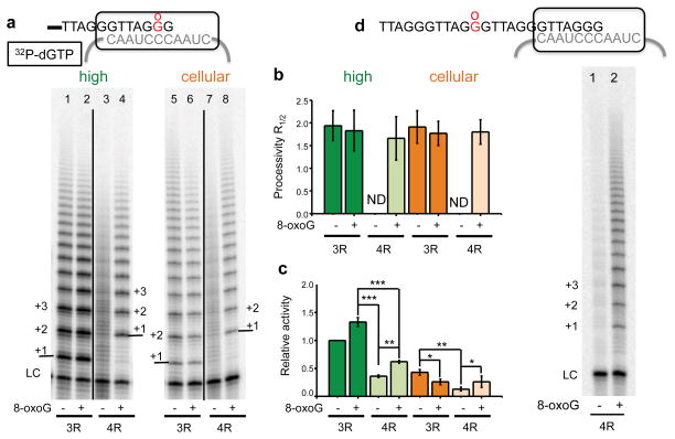 8-oxoG restores telomerase activity on quadruplex folded overhangs ( a ) Telomerase reactions were conducted using primers containing three (3R) or four (4R) TTAGGG repeats, with a middle G or 8-oxoG in the terminal repeat ( Supplementary Table 1 , oligos #3, 5, 6 and 8). Reactions contained high (lanes 1–4) or cellular (lanes 5–8) dNTP concentrations and 0.3 μM 32 P-α-dGTP. Products were separated on denaturing gels. The LC was a 32 P end-labeled 36-mer oligonucleotide. Numbers with plus sign indicate number of added repeats. ( b ) and ( c ) Products were normalized to the LC, and used to calculate processivity ( b ) and relative activity ( c ). Bars represent the mean ± sd from three independent reactions. * p