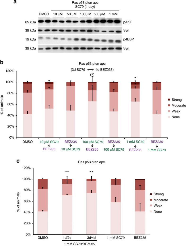 AKT activator SC79 promotes sensitivity to PI3K pathway inhibition. ( a ) Western blot analysis of PI3K signalling pathway output in ras G12V and ras G12V p53 Ri pten Ri apc Ri hindguts after 1 day feeding of SC79 at indicated doses. Syn, Syntaxin (loading control);ten hindguts per replicate. ( b ) Quantification of dissemination in ras G12V and ras G12V p53 Ri pten Ri apc Ri animals after sequential treatment with BEZ235 and indicated doses of SC79. ( c ) Quantification of dissemination in ras G12V and ras G12V p53 Ri pten Ri apc Ri animals after two different treatment schedules of SC79/BEZ235 and each drug alone. ( b , c ) n =2 replicates, 30 flies per replicate; error bars: s.e.m. * P