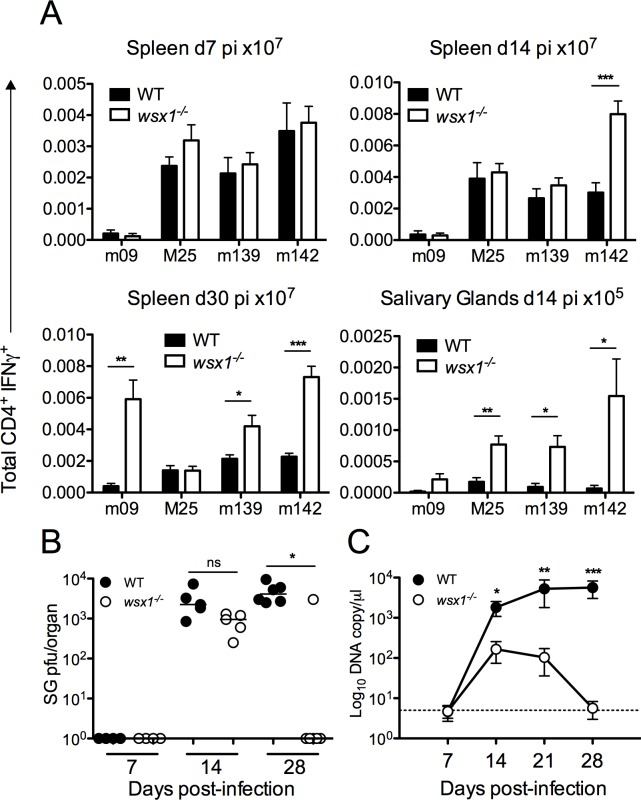 IL-27 promotes CD4 + IL-10 + development and impairs anti-MCMV T H 1 immunity and control of MCMV persistence. Il-27r α -/- or WT (C57BL/6) mice were infected with MCMV and spleen and salivary gland CD4 + /IFNγ + (A) responses were quantified and expressed as mean + SEM of 11 mice/group. (B) Replicating virus in salivary gland homogenates of Il-27r α -/- and WT mice is shown as individual mice + median. Data is representative of 2 experiments. (C) MCMV genomes in saliva were quantified by qPCR. Data is shown as mean ± SEM from 11 mice per group from 2 replicative experiments.