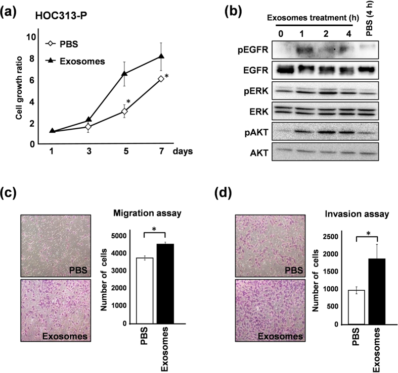 LM-exosomes increase cell viability and cell motility in HOC313-P cells. ( a ) HOC313-P cells were treated with PBS or LM-exosomes, and the effect of exosomes on cell growth was determined using an in vitro WST-8 assay at the indicated times. ( b ) Western blot analysis of EGFR, ERK and AKT and their phosphorylation status is shown in HOC313-P cells treated with LM-exosomes for the indicated amounts of time. ( c and d ) Cell migration was assessed by Transwell migration assay ( c ) and cell invasion was assessed by Transwell invasion assay ( d ) in HOC313-P cells treated with either PBS or LM-exosomes. Experiments were performed in triplicate. (Bars, SD). Student's t -test was used for statistical analysis; asterisks represent P