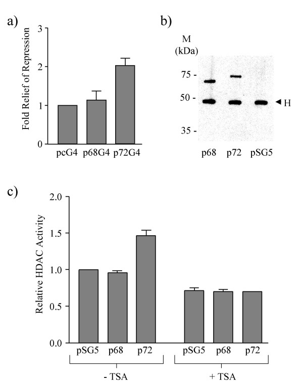 The involvement of HDAC activity in transcriptional repression by p68/p72. a) Relief of p68/p72 repression of MLP-CAT transcription by TSA. 1 μg of pcDNA3-GAL4 (pcG4) or GAL4-tagged p68/p72 (p68G4/p72G4) were co-transfected with 9 μg of MLP-CAT and TSA was added 16 hr after transfection, at a final concentration of 300 nM. The values for p68G4 and p72G4 are given relative to the baseline value for the pcG4 vector control, which was set at 1, and represent the average from three experiments. b) Immunoprecipitation/western blotting of myc-tagged p68 and p72 from 293 cells expressing these proteins. Myc-tagged proteins were immunoprecipitated with the anti-myc epitope antibody, 9E10, and western blotted with the same antibody to detect the presence of p68-myc and p72-myc fusion proteins. A myc-tagged pSG5 vector control is included. pSG5, p68 and p72 all refer to myc-tagged versions. H denotes cross reaction with the antibody heavy chain. Molecular weight markers (in kDa) are indicated. Equal amounts of these immunoprecipitated proteins were used in the HDAC activity assay shown in c. c) HDAC activity assay of immunoprecipitated p68 and p72 (see b). HDAC activity in the presence and absence of TSA is shown relative to that of the myc-tagged pSG5 vector control, which was set at 1, and represent the average from three experiments.