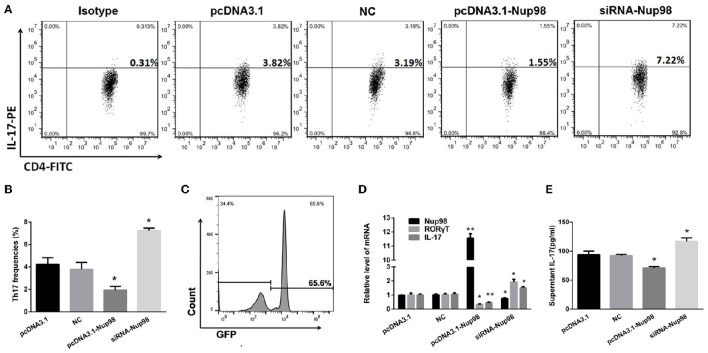 Effects of Nup98 on Th17 cell differentiation in AVMC . CVB3 infected CD4 + T cells from peripheral blood in AVMC patients were transfected with Nup98 siRNA or Nup98 cDNA by the Human T Cell Nucleofector Kit and cultured with anti-CD3, anti-CD28, <t>anti-IL-4</t> and anti-IFN-γ for 72 h. (A) Representative pictures of Th17 cell frequencies of CD4 + T cell in pcDNA3.1, NC, pcDNA3.1-Nup98, and siRNA-nup98 groups were listed. (B) The statistical analysis for Th17 frequencies was shown in histogram. (C) The GFP-transfection efficiency was detected by flow cytometry and a typical FACS picture was shown. (D) The mRNA levels of Nup98, RORγT and IL-17 in CD4 + T cells of four groups. (E) The cultural supernatant IL-17 concentration was measured by ELISA. Data are shown as mean ± SEM. * P