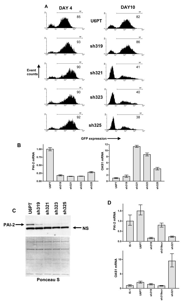 Shorter shRNA length reduced, but did not eliminate, cytotoxicity. A represents flow <t>cytometry</t> analysis of IS-1 cells 4 and 10 days after transduction with U6PT, sh319, sh321, sh323 and sh325 vectors. GFP expression is detected, and the percentage of GFP expressing cells was determined using the M1 gating shown (percentage GFP positive cells is shown in each histogram). B shows a comparative analysis of PAI-2 and OAS1 mRNA, in the samples described in A, 4 days after transduction. Data were generated by QRT-PCR and error bars are as described in previous figures. In C, cell lysates from samples of transduced cells described in A and B were subjected to immunoblotting with anti-PAI-2 monoclonal antibodies. Ponceau S staining served as a gel loading control, as did comparison of a single non-specific band (NS) in the immunoblot. D shows QRT-PCR analysis, as in B, for IS-1 cell mRNAs after transduction with or without U6PT, sh319, sh319scr and sh321 vectors.