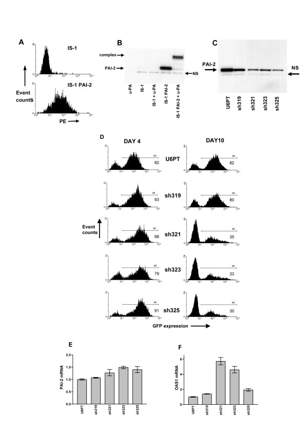 PAI-2-targeted RNAi with overexpression of functional PAI-2 in IS-1 cells. IS-1 cells were transduced with a lentiviral vector for delivery of the human PAI-2 cDNA under control of the CMV promoter. A shows a flow cytometry analysis for detection of PAI-2 in transduced IS-1 PAI-2, and non-transduced IS-1 cells. Both cell types were fixed, permeabilised and labelled with anti-PAI-2 monoclonal antibodies, then incubated with PE-labelled secondary antibodies. In B, the functional activity of overexpressed PAI-2 was assessed by immunoblotting of cell lysates, for PAI-2 expression, with or without the addition of 10U of u-PA. u-PA alone is included in lane 1. In C, PAI-2 protein levels were assessed in cell lysates from IS-1 PAI-2 cells, after transduction with U6PT, sh319, sh321, sh323 and sh325 vectors. NS in B and C highlights a single non-specific band which is consistently detected in PAI-2 immunoblots of IS-1 cell lysates. D represents flow cytometry analysis of IS-1 PAI-2 cells 4 and 10 days after transduction with U6PT, sh319, sh321, sh323 and sh325 vectors. GFP expression is detected, and the percentage of GFP expressing cells was determined using the M1 gating shown (percentage GFP positive cells are given in each histogram). E and F show comparative analyses of PAI-2 and OAS1 mRNA expression, respectively, in samples described in D. Samples were analysed 4 days after transduction. Data were generated by QRT-PCR, each target gene was detected in duplicate, error bars represent the standard deviation of mean values.