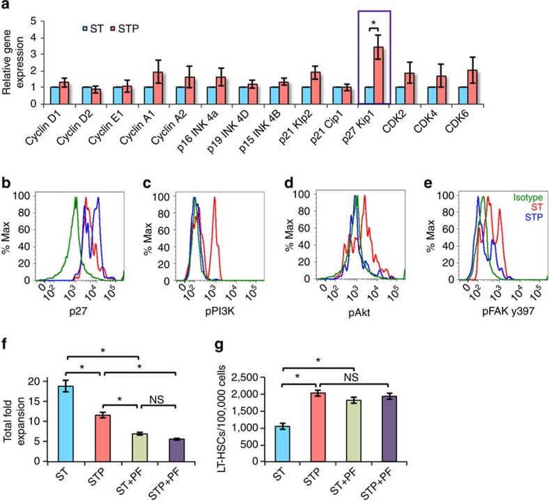 PI3K/Akt inhibition leading to p27kip1 expression inhibits HSC proliferation in vitro . ( a ) BM derived KLS cells cultured in serum-free medium with SCF+TPO without (ST) or with (STP) Postn were examined for expression of cell cycle regulatory genes by qRT-PCR ( n =6, t test: * P =0.03). ( b – e ) Lineage depleted BM cells cultured for 2 days in serum-free medium SCF+TPO without (ST) or with (STP) Postn, were stained for cell surface markers to identify HSCs along with intracellular staining for p27kip1 ( b ) and phosphorylated forms of PI3K ( c ), Akt ( d ) and FAK y397 ( e ) ( n =4). ( f , g ) BM derived KLS cells cultured in serum-free medium containing SCF and TPO for 2 days without (ST) or with (STP) Postn alone, or in combination with the FAK inhibitor PF-573228. After 5 days, cells were harvested and total cell expansion was measured ( f ). Harvested cells were stained for markers to identify LT-HSCs and the proportion of LT-HSCs in different culture conditions was examined ( n =6, t test: * P