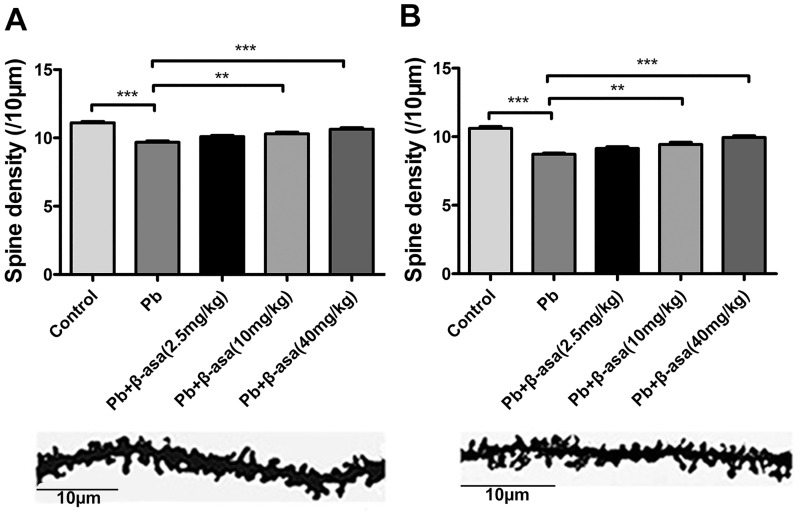 Effects of <t>β-asarone</t> on dendritic spine density of hippocampus in Pb-exposed adult rats. (A) CA1 area; (B) DG area. Histogram reports the quantification of spine density. (** P