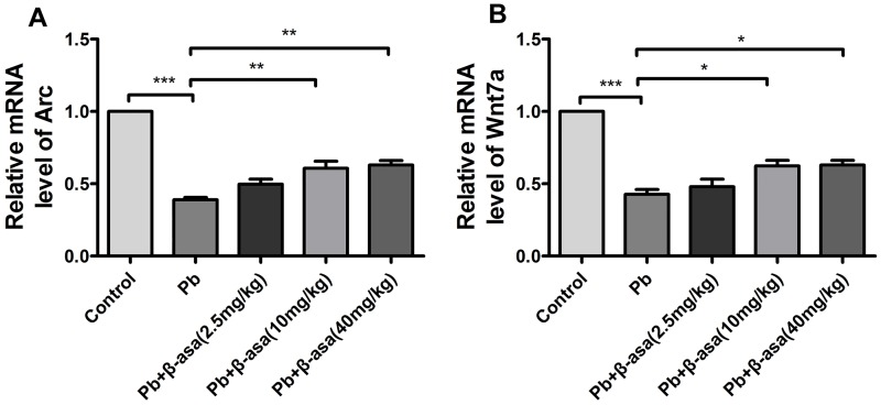 Effects of β-asarone on transcription level of Arc/Arg3.1 and Wnt7a in Pb-exposed adult rats. RT-PCR exhibits the transcription level. (A) Arc/Arg3.1; (B) Wnt7a. Histograms show densitometric analyses of PCR from 3 independent experiments (Mean±SEM). (* P