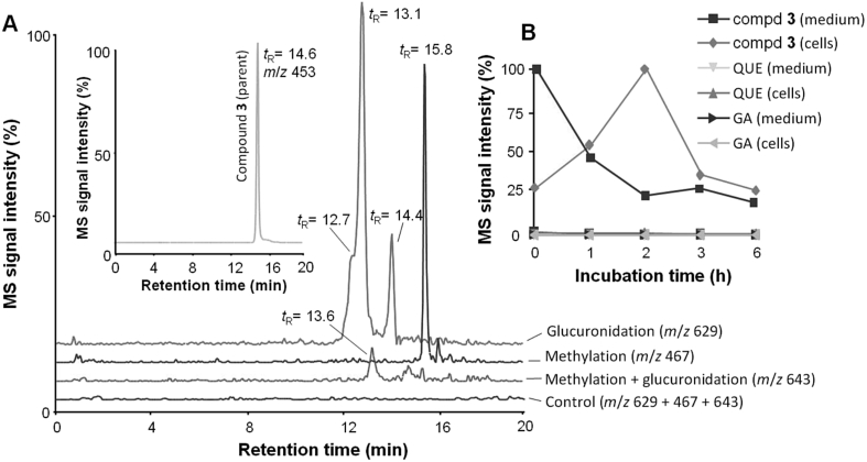 Biotransformation and uptake of 7- O -galloylquercetin ( 3 ) by RAW264.7 cells. Cells were treated for 0–6 h with 15 μM 3 or 0.1% DMSO (control), and cell extracts and culture medium were analyzed by HPLC with negative ESI-MS detection. (A) HPLC/MS chromatograms of 3 (inset) and of its metabolites found in cells after 2 h of treatment. (B) Time course of distribution of 3 , quercetin (QUE) and gallic acid (GA) in cells and medium. Data are means ± SD of three experiments.