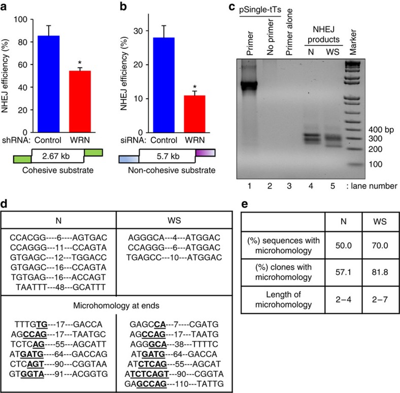 WRN deficiency reduces NHEJ. ( a ) Graph indicating in vitro NHEJ efficiency of control and WRN shRNA expression HeLa cell extracts with 2.67 kb cohesive-end ( Sal I-linearized) <t>pUC18</t> DNA substrate. ( b ) NHEJ efficiency of U2OS cell extracts on 5.7 kb non-cohesive DNA substrate derived from Bst XI-digested pSingle-tTS-shRNA plasmid. Graphs represent end-joining efficiency from three independent experiments. *, P value