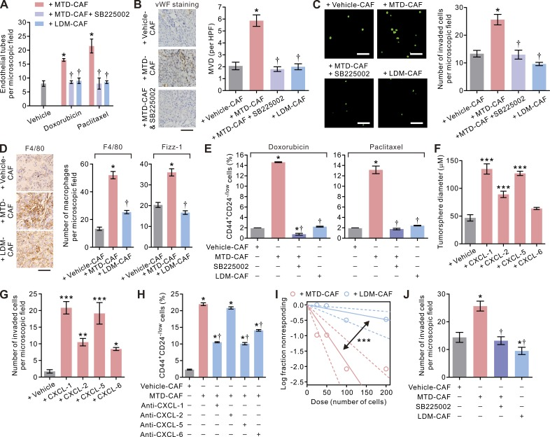 The pleiotropic effects of MTD chemotherapy–treated CAFs mediated through the ELR + chemokine−CXCR-2 paracrine signaling axis. (A) Bar graphs showing the increased endothelial tube formation induced by MTD-doxorubicin– or MTD-paclitaxel–treated BCAF-011 CAFs that could be reduced by treatment with the CXCR-2 inhibitor SB225002 (1 µM) or prevented when LDM-mimetic regimens as described in Fig. 5 (A and C) were used to treat CAFs. Data from two independent experiments ( n = 3 in each group) are shown. (B, left) Representative photomicrographs showing pronounced vascularity in tumors formed by orthotopically implanted BC-011 carcinoma cells along with MTD-doxorubicin (MTD-CAF)– or vehicle (vehicle-CAF)-treated CAFs with or without concurrent intraperitoneal injections of SB225002 (0.5 mg/kg/day) in NOG mice. Also shown are immunohistochemical images of von Willebrand factor (vWF) staining of the endothelial cells in the tumors. Bar, 50 µm. (Right) quantification of microvessel density (MVD) per high-power field (HPF) in tumors. At least 10 different areas were examined in each tissue. Data from one experiment ( n = 3 in each group) are shown. (C, left) The invasive capacities of U937-derived macrophages in response to vehicle-CAFs, MTD-CAFs, or LDM-CAFs in the absence or presence of 1 µM SB225002 in a Transwell invasion assay. Shown are representative immunofluorescence images of the invaded cells, with cell nuclei stained with CYTOX-green. Bars, 100 µm. (Right) The numbers of invaded macrophages. Data from two independent experiments ( n = 3 in each group) are shown. (D, left) Representative immunohistochemical images of F4/80 staining in tumors formed by subcutaneous inoculation of BC-011 cells along with vehicle-, MTD-, or LDM-CAFs in the flank of nude mice. Bar, 50 µm. (Right) Percent F4/80- or <t>Fizz-1–positive</t> cells in the microscopic field. At least 10 different areas were examined in each tissue. Data from two independent experiment ( n = 3 tumor tissues i