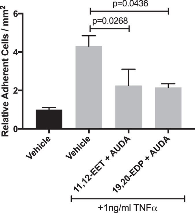 The effect of 11,12-EET or 19,20-EDP plus AUDA on TNFα-induced leukocyte adhesion to HRMEC monolayers. HRMEC monolayers were treated TNFα in the presence or absence of 11,12-EET (0.5 μM) or 19,20-EDP (0.5 μM) with AUDA (10 μM), and PBMC were then flowed over the treated monolayers in a parallel plate flow chamber. Each bar represents the mean ± SEM (vehicle: n = 8; TNFα: n = 9; 11,12-EET + AUDA: n = 6; 19,20-EDP: n = 4).