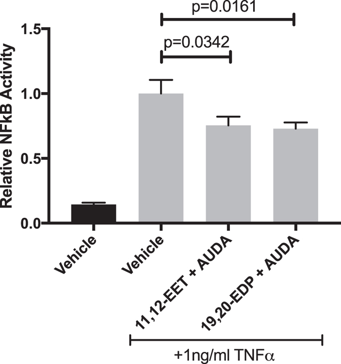 The effect of 11,12-EET or 19,20-EDP plus AUDA on TNFα-induced NFκB Activation. HRMEC were transfected with luciferase constructs and treated with TNFα in the presence or absence of 11,12-EET (0.5 μM) or 19,20-EDP (0.5 μM) with AUDA (10 μM). NFκB activity was determined by measuring the ratio of firefly-to-Renilla luciferase. Each bar represents the mean ± SEM (n = 20).