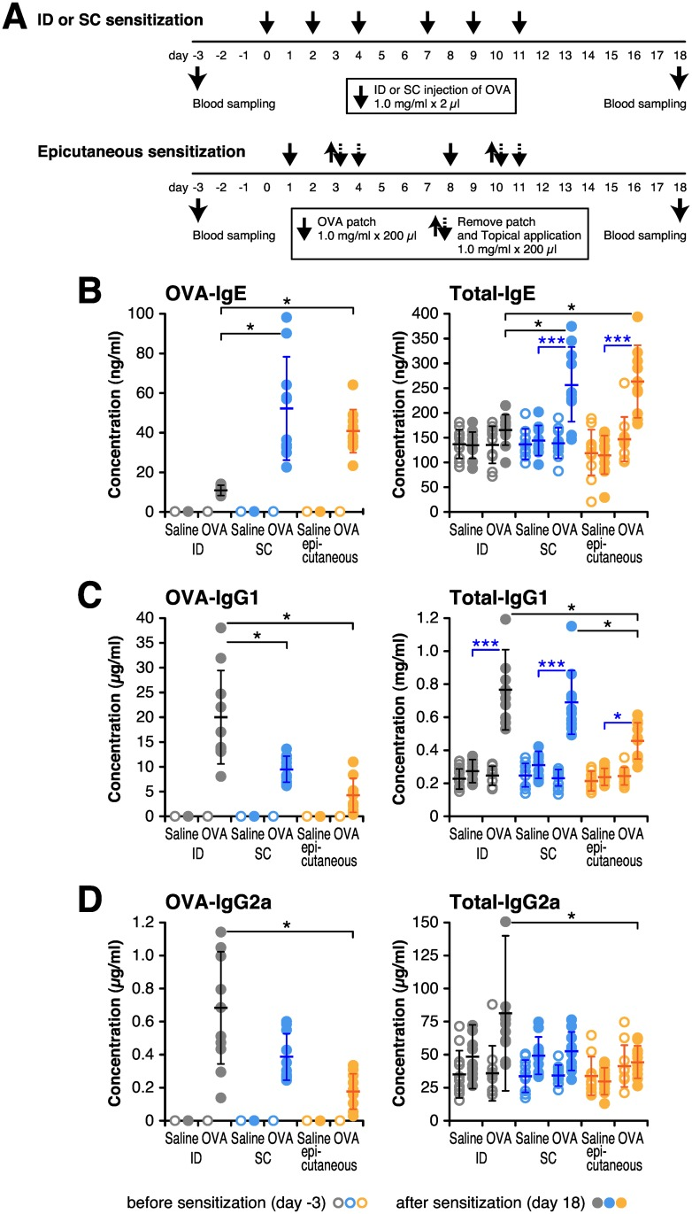 Intradermal antigen injection preferentially diminishes IgE antibody formation. BALB/c mice continuously received 6 times by intradermal (ID) or subcutaneous (SC) injection with 2 μg of OVA in 2 μl saline, or by patch and topical application (epicutaneous) with 200 μg of OVA in 200 μl saline. Blood samples were collected at 3 days before the first sensitization (day-3) and 18 days after the first sensitization (day 18). (A) Timeline for sensitization and blood sampling. (B–D) Concentrations of OVA-specific and total serum IgE (B), IgG1 (C) and IgG2a (D) were determined by ELISA. Each circle represents the concentration of individual 10 mice, and bar shows the mean ± SD. * P