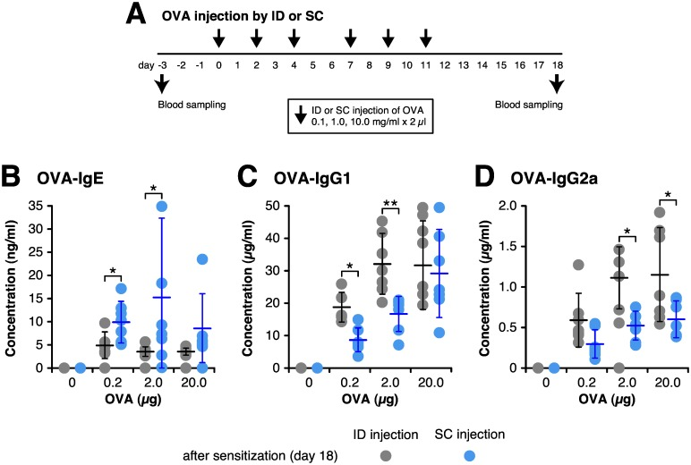 Intradermal injection efficiently induces antigen-specific IgG production. BALB/c mice continuously received 6 times by intradermal (ID) or subcutaneous (SC) injection with three different doses, either 0.2, 2 or 20 μg of OVA in 2 μl saline. Blood samples were collected at 3 days before the first sensitization (day-3) and 18 days after the first sensitization (day 18). (A) Timeline for injection and blood sampling. (B–D) Concentrations of OVA-specific serum IgE (B), IgG1 (C) and IgG2a (D) were determined by ELISA. Each circle represents the concentration of individual 7 mice, and bar shows the mean ± SD. * P