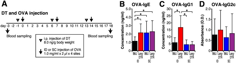 Langerin positive cells are required for diminishment of IgE production. B6/J and Langerin-DTR mice continuously received 3 times of DT and OVA by intradermal (ID) or subcutaneous (SC) injection with 2 μg of OVA in 2 μl saline. Blood samples were collected at 3 days before the first sensitization (day -3) and 18 days after the first sensitization (day 18). (A) Timeline for injection and blood sampling. (B–D) Serum concentrations of OVA-specific IgE (E), IgG1 (F) and IgG2a (G) were determined by ELISA. Each bar shows the mean ± SD of 8 mice per group. * P