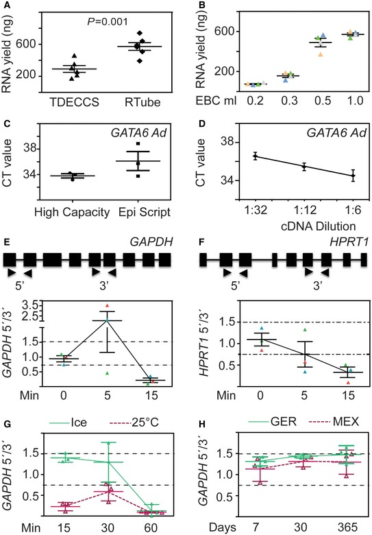 Optimization of EBC ‐based expression analysis for LC diagnosis RTube is suitable for <t>RNA</t> isolation. Two main EBC collection devices, RTube and TurboDECCS, were compared for the total RNA yield ( y ‐axis, ng) obtained using the QIAGEN <t>RNeasy</t> Micro kit and 500 μl EBC as starting material. Triangles and rhombuses are used to denote RNA yield of each individual sample using EBCs collected from the different EBC collection devices. Data are represented as mean ± s.e.m.; n = 6. P ‐values after one‐way ANOVA. 500 μl of EBC is optimal for RNA isolation. Total RNA isolation with the RNeasy Micro kit was performed using 200, 350, 500, or 1,000 μl EBC as starting material. Data are represented as mean ± s.e.m.; n = 4. The High Capacity cDNA Reverse Transcriptase kit is more efficient than EpiScript Reverse Transcriptase. Two RT kits were tested for qRT–PCR‐based analysis of GATA6 Ad. CT values were plotted. Each dot represents the CT value for a technical triplicate. Data are represented as mean ± s.e.m.; n = 3. Serial dilution of cDNA template to determine the linear range of detection of GATA6 Ad. cDNA from control EBC was serially diluted and used as template for qRT–PCR‐based expression analysis of GATA6 Ad. Each dot represents the CT value for a technical triplicate. Data are represented as mean ± s.e.m.; n = 3. Delayed snap‐freezing of EBC after collection compromises mRNA integrity. Top, schematic representation of the precursor mRNAs from GAPDH (E) and HPRT1 (F) showing exons (boxes), introns (lines), and location of primer pairs (arrowheads) used for qRT–PCR‐based expression analysis. Bottom, EBCs were collected and incubated on ice for 0, 5, and 15 min prior to snap‐freezing in liquid nitrogen. Expression of GAPDH and HPRT1 was determined in the EBCs using the indicated primers, and the expression ratios (5′/3′) of each gene were calculated as indicators of mRNA integrity. RNA purified from EBCs with expression ratios of GAPDH and HPRT1 between 0.75 an