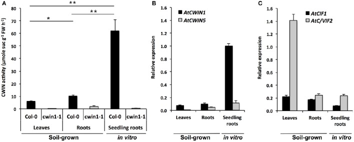 Cell wall invertase activity and gene expression in different Arabidopsis organs. (A) CWIN activity in Col-0 and cwin1-1 was assayed from frozen ground tissues of 5–6 week-old soil-grown plants (leaves and roots) or 9-day-old seedling roots. Data represent mean (±SE) of 2 (seedling roots) or 3 (leaves and roots) independent experiments. (B,C) Relative gene expression of AtCWIN1, AtCWIN5 (B) , AtCIF1 and AtC/VIF2 (C) genes was performed by RT-qPCR and results were normalized to the plant reference genes At4g26410 and AtACTIN2 ( At3g18780 ). Data represent mean (±SE) of 3 independent experiments. AtCWIN2 and -4 are not presented because transcript levels were below the detection threshold. For (A) , asterisks represent significant differences between organs of Col-0 plants (Student's t -test, * P
