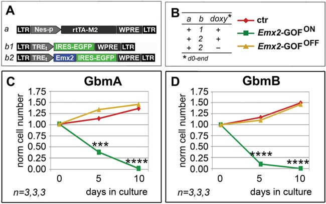 Persisting antioncogenic efficacy of Emx2 upon neural nestin enhancer-restricted overexpression In vitro kinetic progression of GbmA and GbmB lines C, D. , engineered by lentiviral vectors and TetON technology as in A, B. , and kept as floating cultures, under <t>Fgf2</t> and <t>Egf.</t> Cell numbers were normalized against t =0 values. n is the number of biological replicates. p -value was calculated by t-test (one-tail, unpaired): *** p