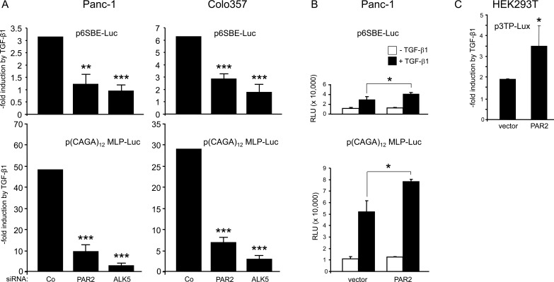 Depletion of PAR2 decreases the sensitivity of TGF-β/Smad responsive reporters to TGF-β1 stimulation A. Panc-1 and Colo357 cells were transfected on day 1 with RNAiMAX along with negative control siRNA (Co), PAR2 siRNA or ALK5 siRNA. On day 2, cells received the same siRNAs along with either p6SBE-Luc ( upper two graphs) or p(CAGA) 12 MLP-Luc ( lower two graphs), and the Renilla luciferase encoding vector pRL-TK-Luc using Lipofectamine 2000. Forty-eight h after the start of the first transfection, cells were stimulated with TGF-β1 for another 24 h followed by dual luciferase measurements. Data are the mean ± SD from six parallel wells. Asterisks indicate significance vs. TGF-β1-treated Co. B. , C. Ectopic expression of PAR2 cells increases the sensitivity of Smad responsive reporter genes to TGF-β1. B . Panc-1 cells were transiently transfected with either empty pcDNA3 vector (vector) or PAR2 encoding vector (PAR2-HA) along with either p6SBE-Luc ( upper graph) or p(CAGA) 12 MLP-Luc ( lower graph), and pRL-TK-Luc. Two days later, cells were treated with 5 ng/ml TGF-β1 for 24 h followed by lysis and dual luciferase assay. Data represent the normalised mean ± SD of six wells. C . HEK293T cells were cotransfected with p3TP-Lux, pRL-TK-Luc, and either empty vector or PAR2 encoding vector. Forty-eight h after the start of transfection, cells were stimulated with TGF-β1 for another 24 h followed by dual luciferase measurements. Data represent the mean ± SD from six wells. Data in A-C are representative of at least four independent experiments.