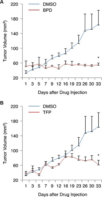 BPD and TFP suppress the growth of TNBC tumors in the mouse tumor model ( A – B ) MDA-MB-231 cells were injected into female nude mice ( n = 3/group). The tumor-bearing mice were given an i.v. injection of (A) BPD (10 mg/kg) or the vehicle control (DMSO), and (B) TFP (10 mg/kg) or DMSO twice per week. The tumor volumes [(L × W 2 )/2] were measured. The results are graphed as mean ± SEM numbers of tumor volumes. Significant P values are shown. * P