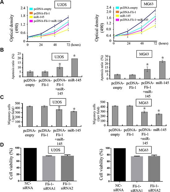 miR-145 suppresses tumor progression through targeting FLI-1 Upon transfection with FLI-1 construct, we rescued the expression of FLI-1 in U2OS and MG-63 cells. The expression of FLI-1 protein was validated by western blot assays; ( A ) CCK-8 assays were used to detect in U2OS and MG-63 cells co-transfected with miR-145 mimic and pcDNA- FLI-1 -plasmid; ( B ) Cell apoptosis of U2OS and MG-63 cells treated as described was detected by Annexin V-PI staining; and ( C ) Transwell assays were performed to detect the effects on cell migration of U2OS and MG-63 cells treated as described. Upon transfection with the FLI-1 plasmid, miR-145-mediated suppression of cell proliferation and cell migration was abolished, and promotion of cell apoptosis was inhibited. (×200); ( D ) We detected the effect of FLI-1 siRNA in MG63 and U2OS cells by CCK8 assay. * p