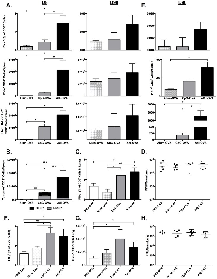 Kinetics of Primary CTL Responses and Viral Control after Subcutaneous Vaccination with OVA. ( A-D ) Prime-only Vaccination. C57BL/6 mice were vaccinated by subcutaneous injection of 10 μg ovalbumin in PBS alone or supplemented with 5% Adjuplex or 10 μg CpG. 3–5 mice/group were sacrificed at 8 and 90 days after vaccination. (A) The percentages of SIINFEKL-specific IFN-γ + TNF-α + and IL-2 + CD8 T cells in spleens were quantified by intracellular cytokine staining at day 8 and 90 after vaccination. ( B ) At day 7 after vaccination, splenocytes were stained with anti-CD8, K b /SIINFEKL tetramers, anti-CD127 and anti-KLRG-1. The percentages of short-lived effector cells (SLECs; CD127 LO /KLRG-1 HI ) and memory precursor effector cells (MPECs; CD127 HI /KLRG-1 LO ) among tetramer-binding SIINFEKL-specific CD8 T cells were quantified by flow cytometry. Data shows the total numbers of SLECs and MPECs in spleens of vaccinated mice. ( C-D ) Secondary CTL recall responses and lung viral titers after prime-only SQ vaccination and influenza challenge. C57BL/6 mice were vaccinated by SQ injection of 10 μg ovalbumin in PBS alone or supplemented with 5% Adjuplex or 10 μg CpG. 90 days after vaccination, mice were challenged by IN administration of 500 PFU of recombinant influenza A/PR/8/34-OT-I H1N1 expressing the OVA SIINFEKL peptide. 6 days after challenge, 3–5 mice/group were sacrificed and lungs were collected to quantify SIINFEKL-specific CTLs and viral titers. ( C ) Frequency of SIINFEKL-specific IFN-γ + CD8 + T cells among all CD8 + lung mononuclear cells at 6 days after challenge. ( D ) Lung viral titers expressed as plaque-forming-units (PFU) per gram of lung at 6 days after challenge. * indicates p