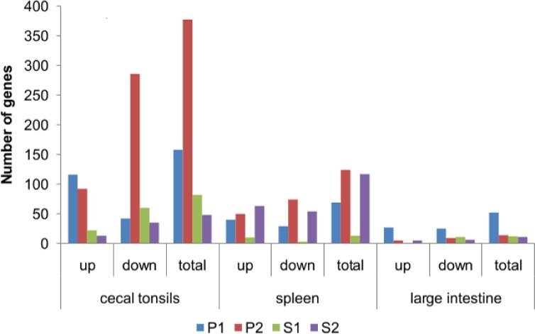 Differentially expressed genes (DEG) in cecal tonsils, spleen, and large intestine of the animals that were treated in ovo with prebiotics and synbiotics. Gene expression was determined by whole-genome microarray GeneChip 1.1 ST (Affymetrix, Santa Clara, CA, US) for four substances injected in ovo . Experimental groups were injected, in ovo , with prebiotics: inulin (P1) and GOS (P2), and synbiotics: inulin with L . lactis subsp. lactis IBB2955 (S1) and GOS with L . lactis subsp. cremoris IBB 477 (S2). The cut-off value was set at 1.66
