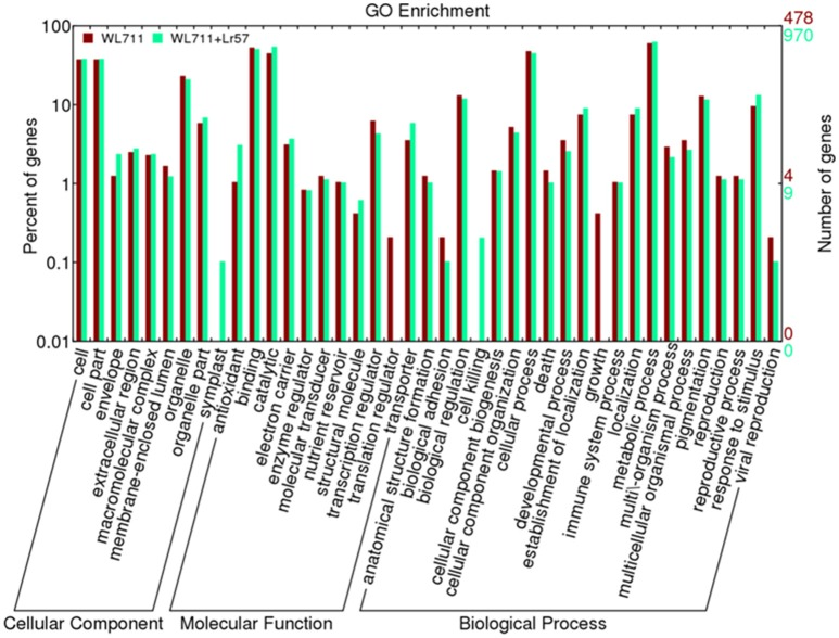 Distribution of differentially expressed transcripts/genes involved in biological processes, molecular functions and cellular components in WL711 and WL711+ Lr57 .