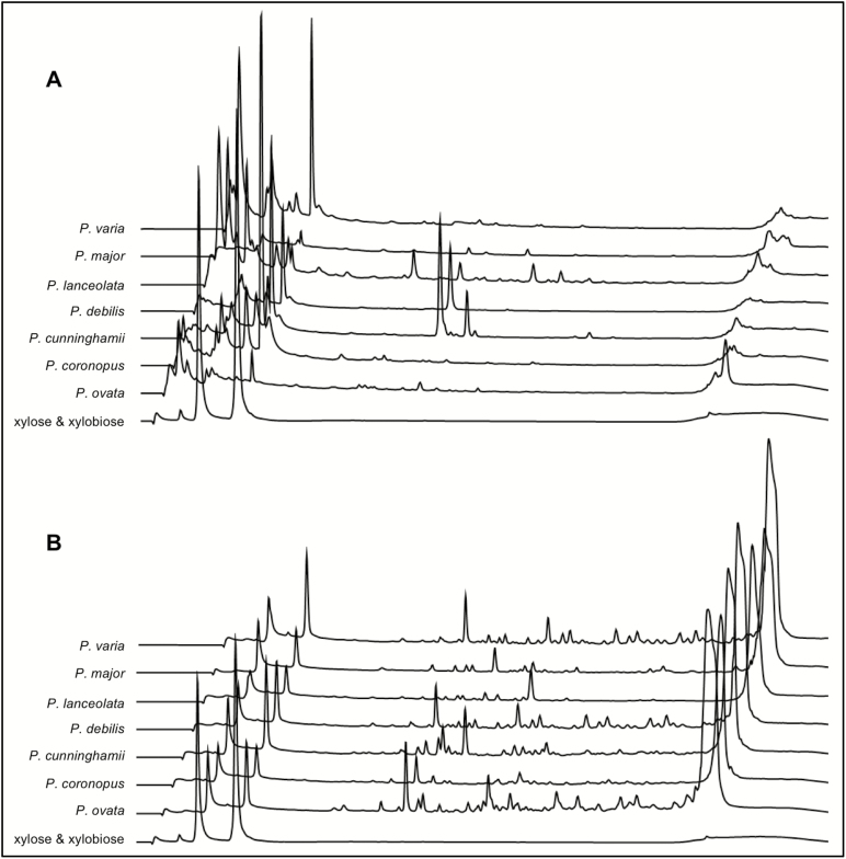 Xylanase-dependent oligosaccharide profiles reveal differences in the digestibility of seed coat mucilage from different Plantago species. Extruded seed mucilage was subjected to GH10 xylanase digestion. (A) untreated mucilage. (B) mucilage samples pre-treated with <t>trifluoroacetic</t> acid <t>(TFA).</t> Only P. cunninghamii , P. debilis , and P. lanceolata showed cleaved products (oligosaccharides) when incubated with the GH10 xylanase without TFA pre-treatment. All mucilage samples produced different oligosaccharide maps when pre-treated with TFA. The chromatograms have been off-set to aid interpretation. Elution times for xylose and xylobiose 2.5 min and 3.25 min, respectively.
