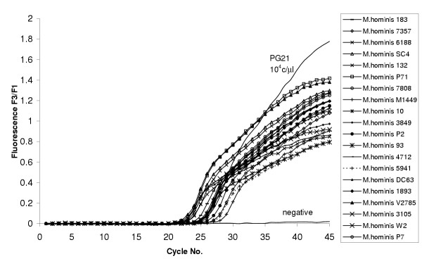 Specificity of the LightCycler PCR. The LightCycler PCR run with different M. hominis isolates. Concentration of DNA from different isolates used in the study was estimated to 10 4 copies/μl of PG21 DNA, which was used as a standard DNA.