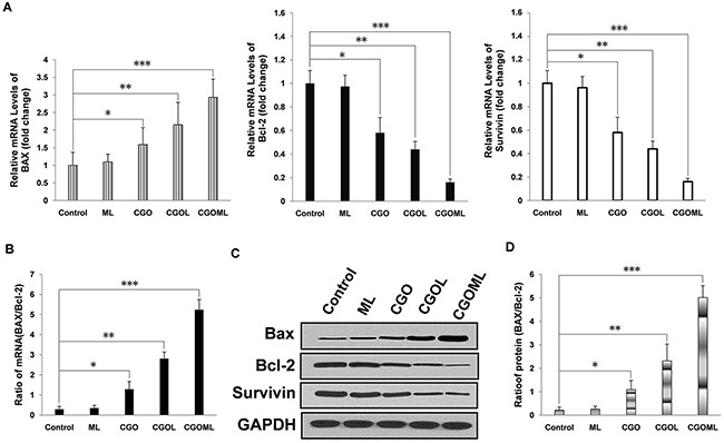 CGOML activate cell apoptosis in nude mice bearing breast cancer (MCF-7) Notes: A. RT-qPCR results show the mRNA levels of BAX, Bcl-2 and Survivin in tumors collected from mice of 5 different groups (Control, CGO, CGOL, ML, and CGOML groups). The left panel exhibits the relative mRNA levels of BAX in the 5 groups, the middle panel exhibits the relative mRNA levels of Bcl-2 in the 5 groups, whereas the right panel exhibits the relative mRNA levels of Survivin in the 5 groups. B. The mRNA level of BAX/Bcl-2 ratio was determined from results of (A) in each group. C. Western blot analysis shows BAX-, Bcl-2- and Survivin protein levels in tumor tissues collected from nude mice in different groups (Control, CGO, CGOL, ML, and CGOML). D. The protein levels of BAX/Bcl-2 ratio was calculated from results of (C). * p