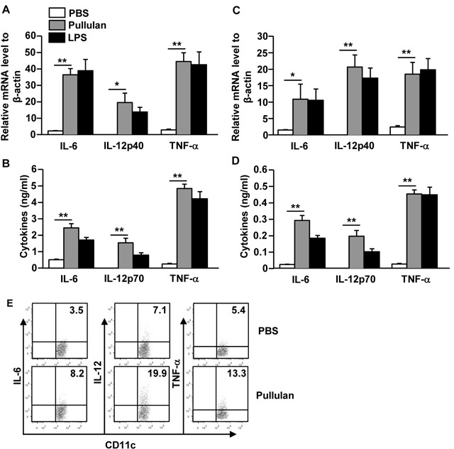 Pullulan induces pro-inflammatory cytokine production on DCs BMDCs were incubated with 5 μg/mL pullulan or LPS for 2 or 24 hours. A. mRNA levels of <t>IL-6,</t> IL-12p40 and TNF-α in BMDCs were measured 2 hours after treatment B. IL-6, IL-12p70 and TNF-α levels in culture supernatant 24 hours after treatment. C. Cytokine mRNA levels in splenocytes were measured 2 hours after 25 mg/kg pullulan and LPS injection. D. Cytokine concentrations in sera from pullulan- or LPS-treated mice are shown. E. Intracellular cytokine production levels were measured in spleen DCs. All data are representative of or the average of analyses of 6 individual mice each group (2 mice per experiment, 3 independent experiments); * p