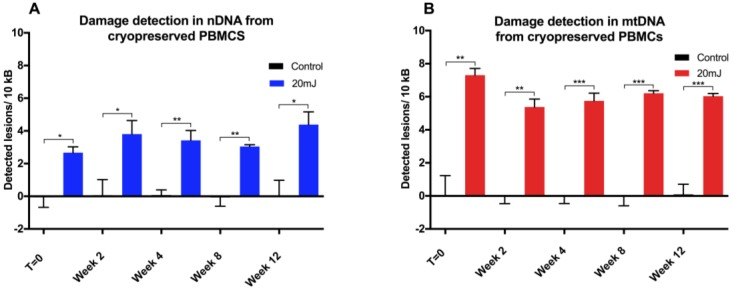 DNA damage assessment in cryopreserved PBMCs. qPCR measurement of UVC-induced ( A ) nDNA and( B ) mtDNA damage in revived PBMCs following cryopreservation over 12 weeks ( n = 3). Results are presented as mean ± SE. * p