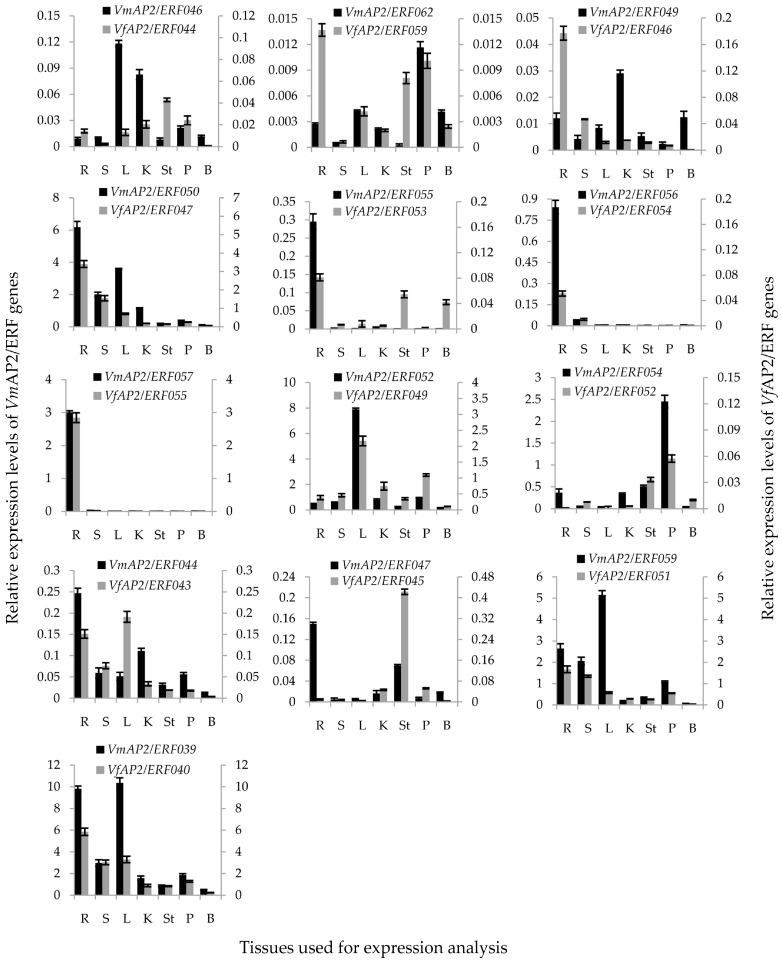 Tissue specific expression analyses of 26 Vf / VmAP2 / ERF genes in Vernicia . Root (R), stem (S), leaf (L), kernel (K), stamen (St), petal (P) and bud (B) tissues were used for the expression analysis. The y -axis represents relative expression level. Primary y -axis indicates transcript levels of VmAP2/ERFs ; secondary y -axis indicates transcript levels of VfAP2/ERFs . Expression level was analyzed using qRT-PCR in triplicate.