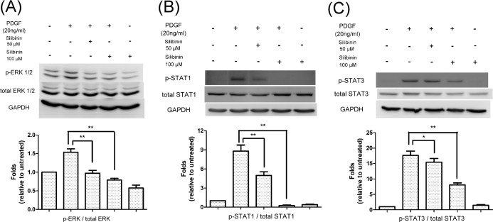 Effects of silibinin on platelet-derived growth factor (PDGF)-regulated signaling pathways in Human Tenon's fibroblasts (HTFs). HTFs were pretreated with either vehicle or silibinin (50 or 100 μM) for 24 h. The cells were then treated with PDGF for 30 min. (A) Whole cell lysates were prepared and analyzed via western blot by using antibodies directed against phosphorylated-extracellular-signal-regulated kinase (ERK) 1/2, total ERK 1/2, and GAPDH. Mean phosphorylated-ERK 1/2 levels were determined using densitometric analysis and normalized to total ERK 1/2. (B) Whole cell lysates were prepared and analyzed via western blot by using antibodies directed against phosphorylated-signal transducer and activator of transcription 1 (STAT1), total STAT1, and GAPDH. Mean phosphorylated-STAT1 levels were determined using densitometric analysis and normalized to total STAT1. (C) Whole cell lysates were prepared and analyzed via western blot by using antibodies directed against phosphorylated-STAT3, total STAT3, and GAPDH. Mean phosphorylated-STAT3 levels were determined using densitometric analysis and normalized to total STAT3. The data are presented as means ± SEM of three independent experiments. Asterisks (* and **) indicate responses that are significantly different (p