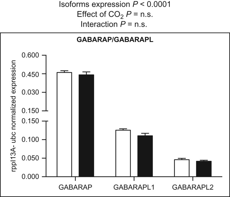 Messenger RNA expression levels of GABARAP and GABARAPL genes. Data were normalized to the geometric average of the reference genes ribosomal protein L13A (rpl13A) and ubiquitin (ubc). Data were analysed by two-way ANOVA followed by Sidak post hoc test. Open and filled columns represent three-spined sticklebacks exposed to control water ( n = 12) and high-CO 2 water ( n = 12) for 43 days. Values are shown as means + SEM.