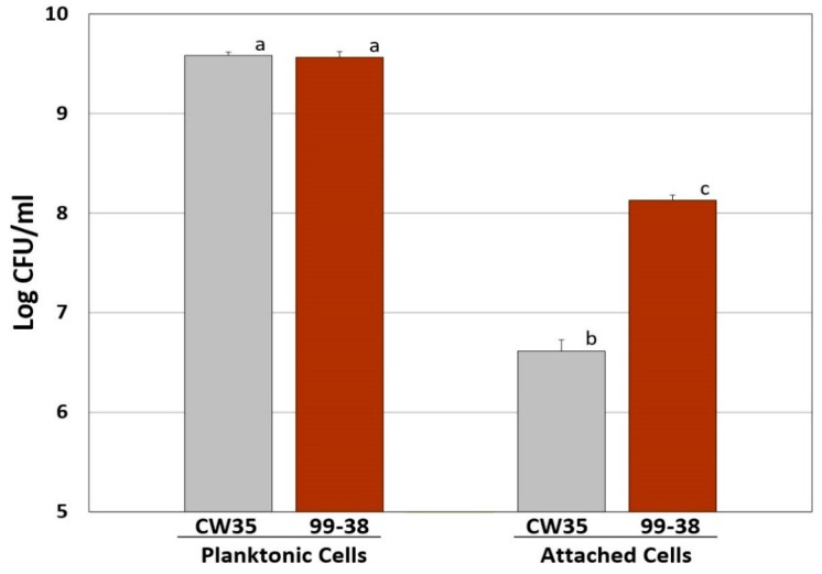 Comparison of attachment characteristics of L. monocytogenes CW35 (weakly-adherent) and 99-38 (strongly-adherent) in microplate wells. Enumeration of well cell cultures (left) and attached cells (right) after release by treatment with protease. All data represent the means of triplicate replications. Means with the same lowercase letters are not significantly different; means with different letters are significantly different ( P