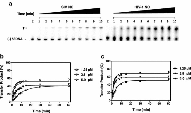 "Kinetics of SIV minus-strand transfer in the presence of SIV and HIV-1 NC proteins. Reactions were incubated with the indicated concentrations of SIV or HIV-1 NC for 60 min at 37 °C and were analyzed as described in "" Methods "" section. a Representative gels showing DNA species present in reactions with 1.25 µM SIV or HIV-1 NC. The transfer product (T) and (−) SSDNA are indicated to the left of the gel image and these were the only two bands that appeared on the gel. Note that self-priming products [ 18 , 19 , 100 , 114 ] were not formed under the conditions used for these assays. Lane c shows the migration of (−) SSDNA in the absence of other reactants. b , c The % strand transfer product formed was plotted against time of incubation for reactions with SIV NC ( b ) or HIV-1 NC ( c ). Error bars represent the SD from three or more independent experiments"