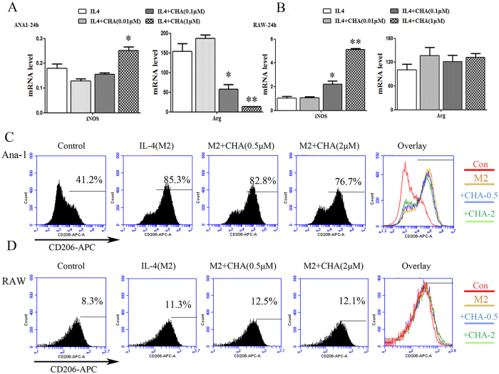 Effect of CHA on macrophage marker expression induced by interleukin (IL)-4. Ana-1 and RAW264.7 cells were treated with interleukin (IL)-4 (20 ng/ml) in the presence of DMSO or different concentrations of CHA for 24 h. The mRNA levels of M1-marker gene iNOS and M2-marker gene Arg in Ana-1 ( A ) and RAW264.7 cells ( B ) were measured by real-time RT-PCR. The expression of mRNAs was normalized to GAPDH. The expressions of CD206 in Ana-1 ( C ) and RAW264.7 cells ( D ) were evaluated by flow cytometry. The histogram bars represent three independent experiments. The data are presented as the mean ± SD. *p-value