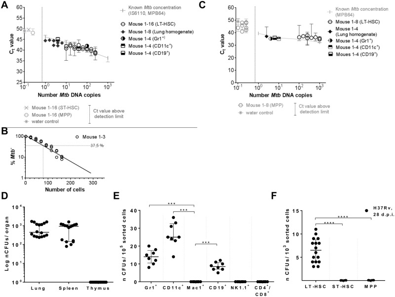 Detection of Mtb infection in different organs and hematopoietic cells of mice day 28 p.i. by Mtb DNA PCR and Mtb CFU. C57BL/6 mice were infected with 10 5 CFUs Mtb (H37Rv). (A) Quantification of Mtb -specific DNA by real-time TaqMan PCR using probes targeting MPB64 and IS6110 ( S4 Fig ) on genomic DNA of 10 5 lung cells (n = 8), 10 5 Gr1 + , CD11c + , CD19 + , Mac1 + , NK1.1 + , CD4 + /8 + cells (n = 4; S1C Fig ), and 10 3 LT-pHSCs, ST-pHSCs and MPPs (n = 16; S1B Fig ). (B) Quantification of Mtb -specific DNA by limiting dilutions using a single-target PCR for IS6110 (n = 3; S2B Fig ). (C) Real-time SYBR green PCR using primers targeting MPB64 (n = 4–8; S4 Fig ). Real-time PCRs were performed in 2 independent runs in technical triplicates and normalized to murine GAPDH. Known Mtb concentrations were used as reference. (D) CFU enumeration on Middlebrook 7H11 agar in cells of lung, spleen and thymus (n = 16). (E) CFU enumeration on Middlebrook 7H11 agar for Lin + cell populations (n = 8). (F) CFU enumeration on Middlebrook 7H11 agar for hematopoietic progenitors (n = 16). Shown are data of 4 independent experiments. Data are shown as median + interquartile. * P ˂ 0.05, ** P ˂ 0.005, *** P ˂ 0.0005, **** P ˂ 0.00005 by Mann-Whitney test.