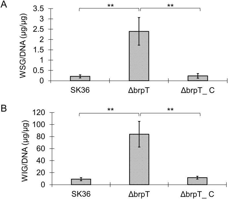 Efficiency of glucan accumulation in S . sanguinis biofilms. S . sanguinis wild-type SK36, the brpT mutant Δ brpT and the complemented mutant Δ brpT _C were grown anaerobically for 24 h in BM medium containing 1% sucrose at 37°C. The amounts of (A) water soluble glucans and (B) water insoluble glucans in the biofilms were quantified using the phenol-sulfuric acid method and normalized to the concentration of genomic DNA.