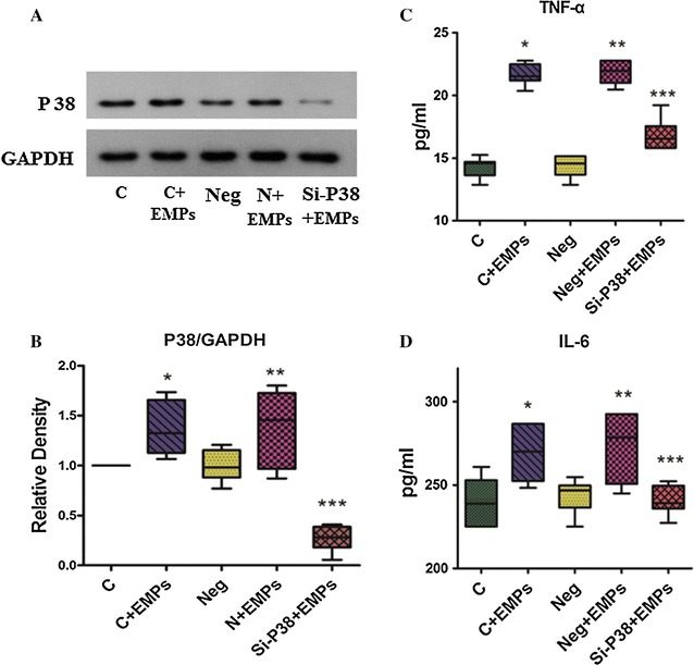EMPs can stimulate TNF-α and IL-6 release in HUVECs, which can be down-regulated by <t>P38-siRNAs.</t> A , B Immunoblotting showed EMPs can increase P38 expression, which can be reduced by siRNAs targeting P38 <t>MAPK</t> (Si-P38). C , D TNF-α and IL-6 concentration were relative low in control ( C ) and negative (Neg) group. After 6 h stimulated with EMPs, TNF-α and IL-6 level increased in each group. TNF-α and IL-6 level in siRNAs P38 MAPK group was significantly lower than that in non-P38 siRNAs interfering groups. (* P